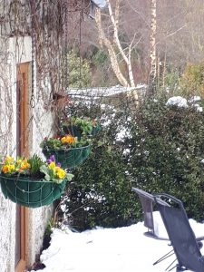 Hanging baskets with a little thaw after the blizzard