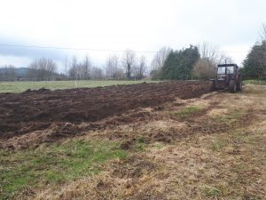 Breaking the first sod - Ploughing with a 2 sod plough