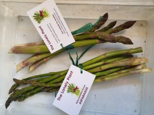 Asparagus in 100g bundles - 5 large spears per bundle or smaller spears by weight - all equally tasty